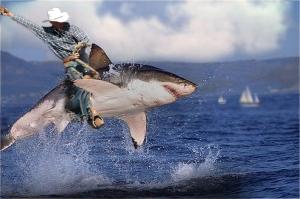 rodeo-shark