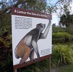 extinct-lemur-nash